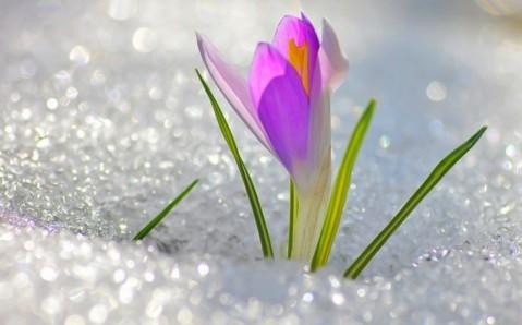 Cinco mejores eventos de la primavera en Ucrania