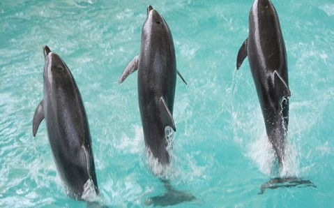 Yevpatoria Dolphinarium