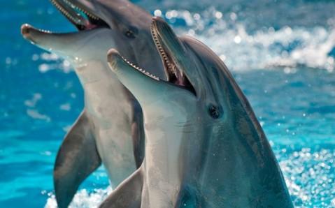 Алуштинский дельфинарий