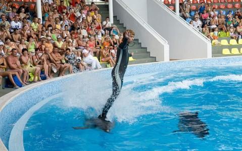 Дельфинарий «Коктебель»