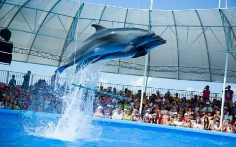 Феодосийский дельфинарий