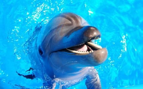 Delfinario de Berdiansk
