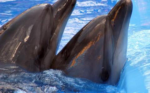 Delfinario de Járkiv