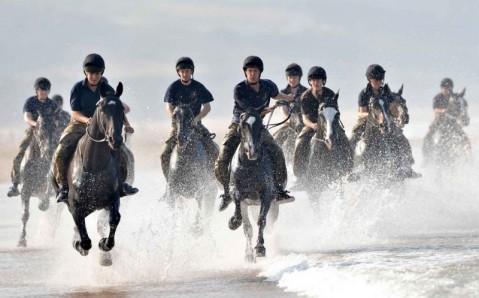 Конно-спортивный клуб Nikolo horse club
